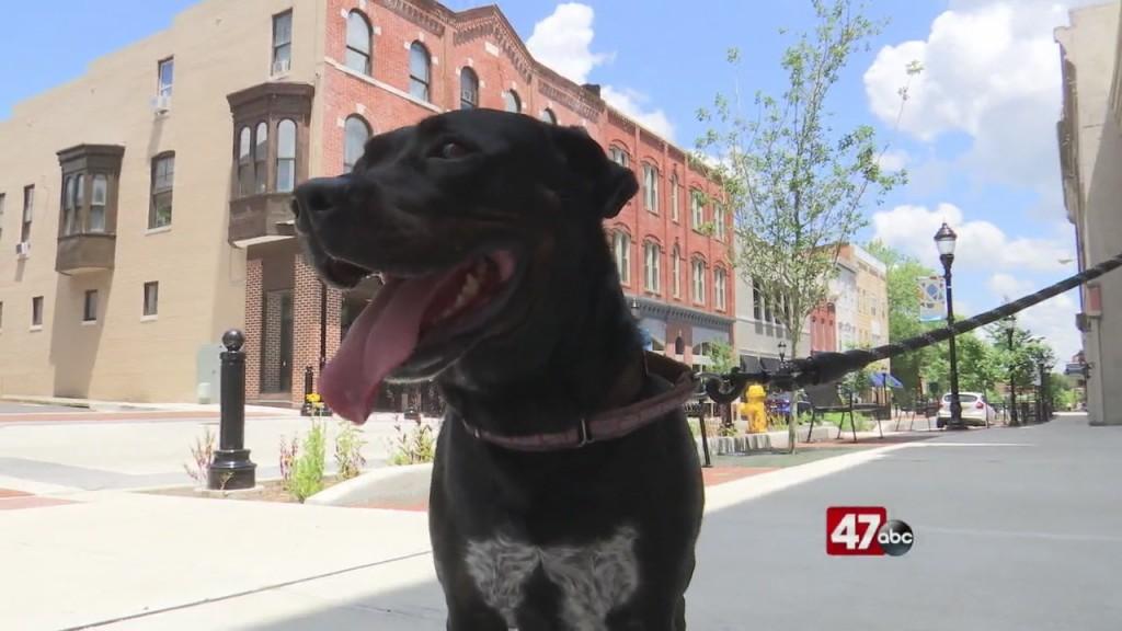 Pets On The Plaza: Meet Sailor Luna
