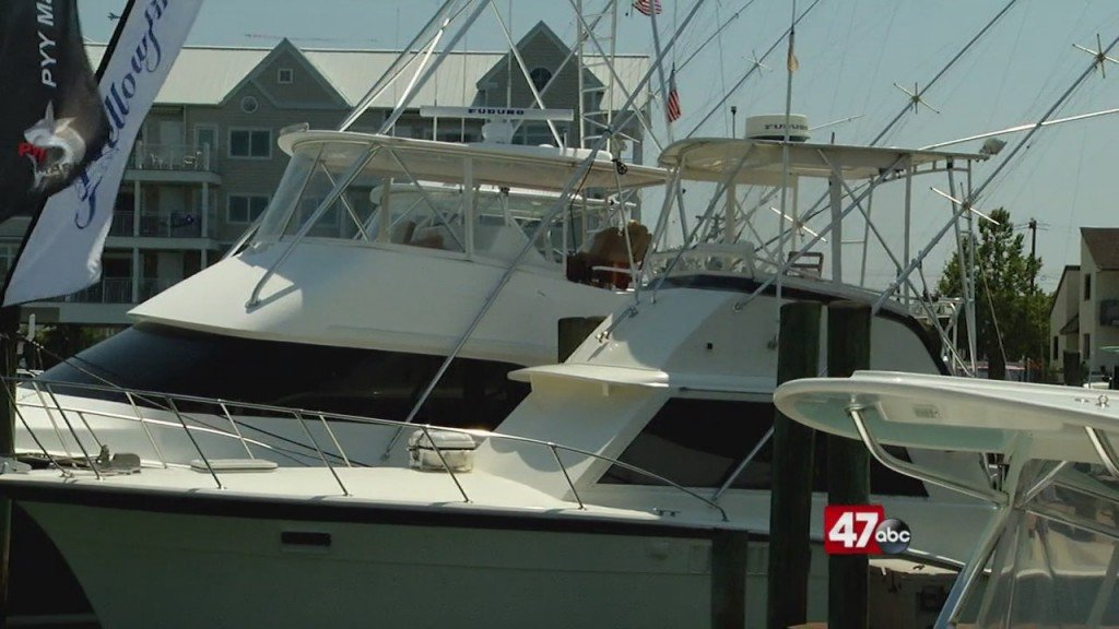 White Marlin Open Begins