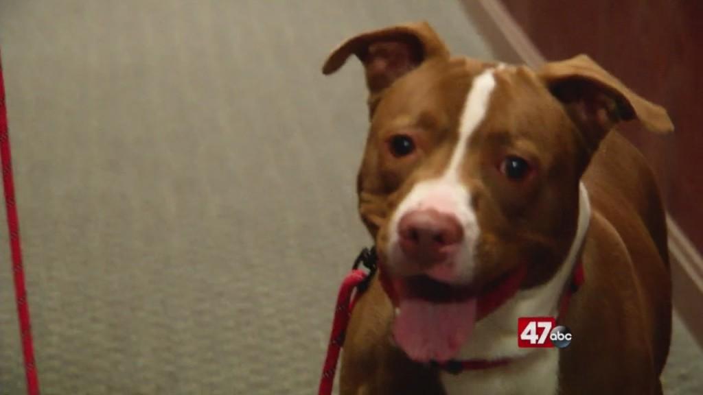 Pets On The Plaza: Meet Maundy