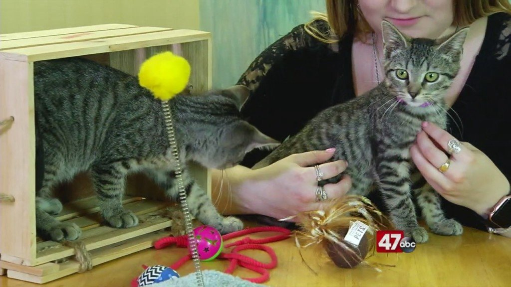 Pets On The Plaza: Meet Skippy And Tagalong