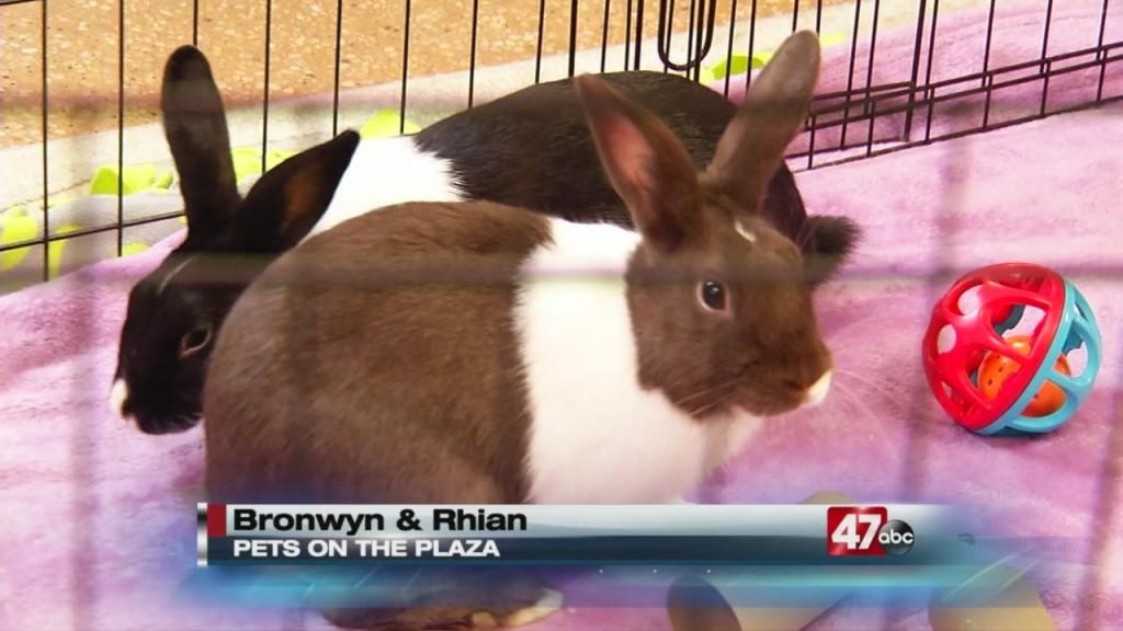 Pets On The Plaza: Meet Bronwyn And Rhian