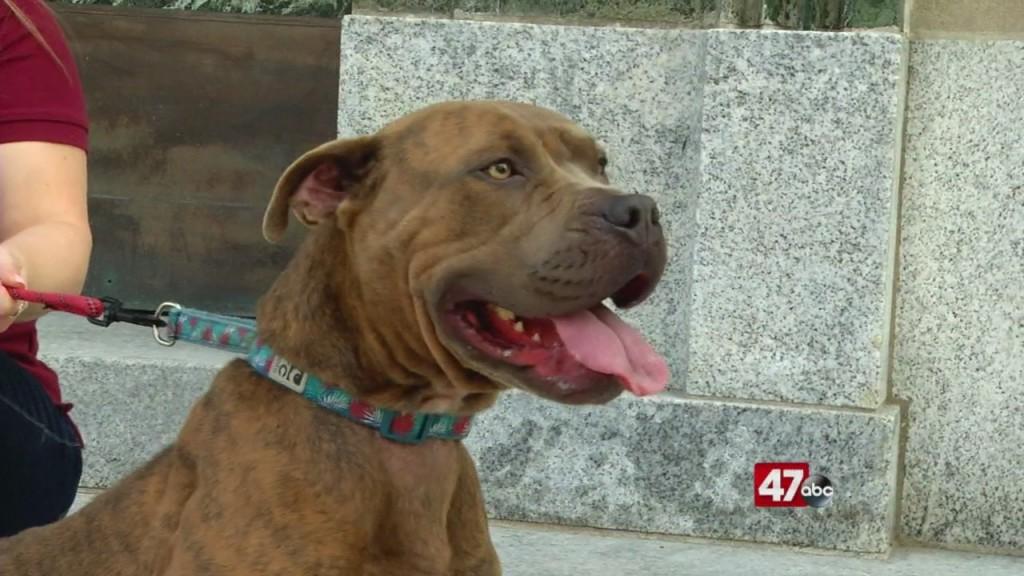 Pets On The Plaza: Meet Sasha