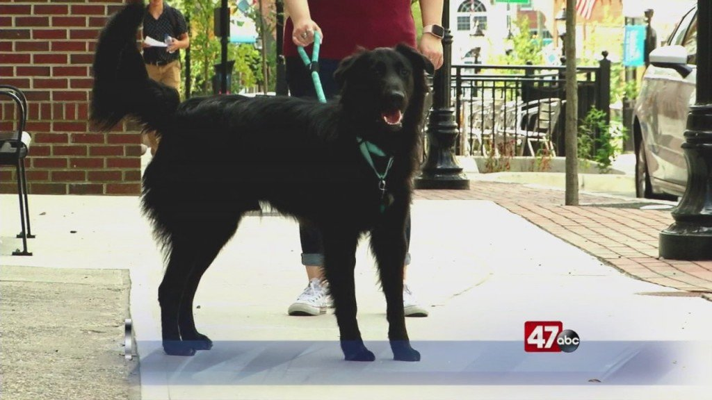 Pets On The Plaza: Meet Rocky