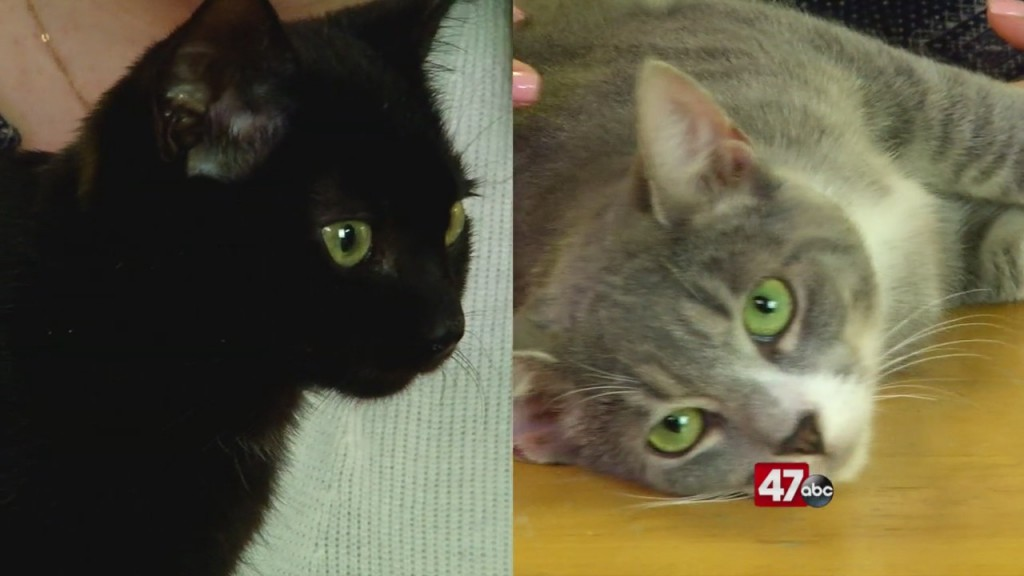 Pets On The Plaza: Meet Captain Holt And Adrian Pimento