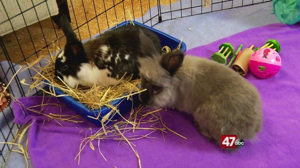 Pets On The Plaza: Meet Charger And Juju