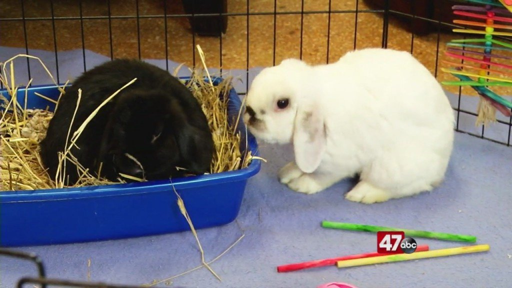 Pets On The Plaza: Meet Asher And Misa