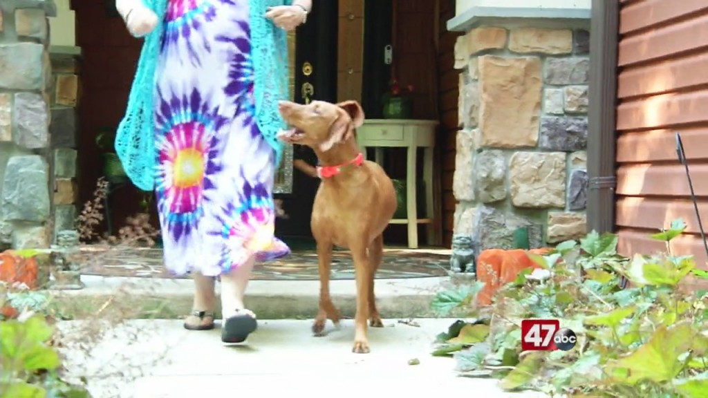 Dog Helping Veterans