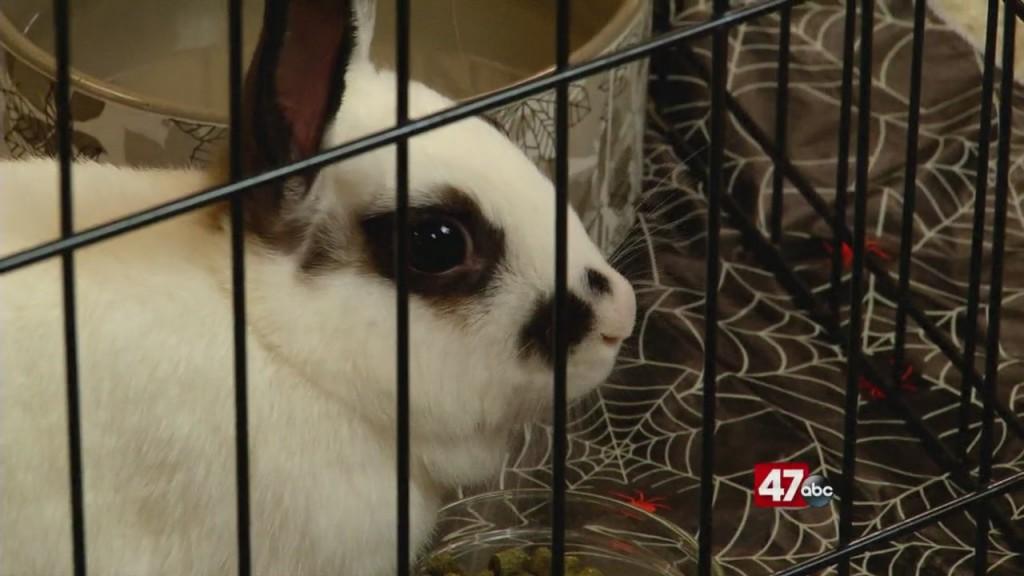 Pets On The Plaza: Meet Macy
