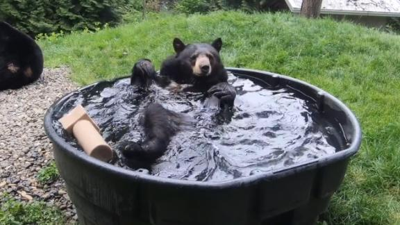 200507125028 Bear Takes Bath Live Video