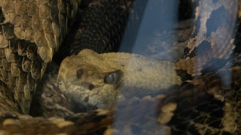 Snake Pic0