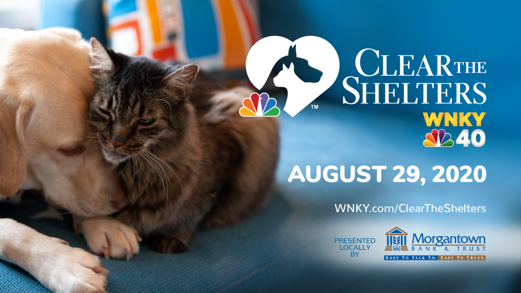 Clear The Shelters Fgfx 1