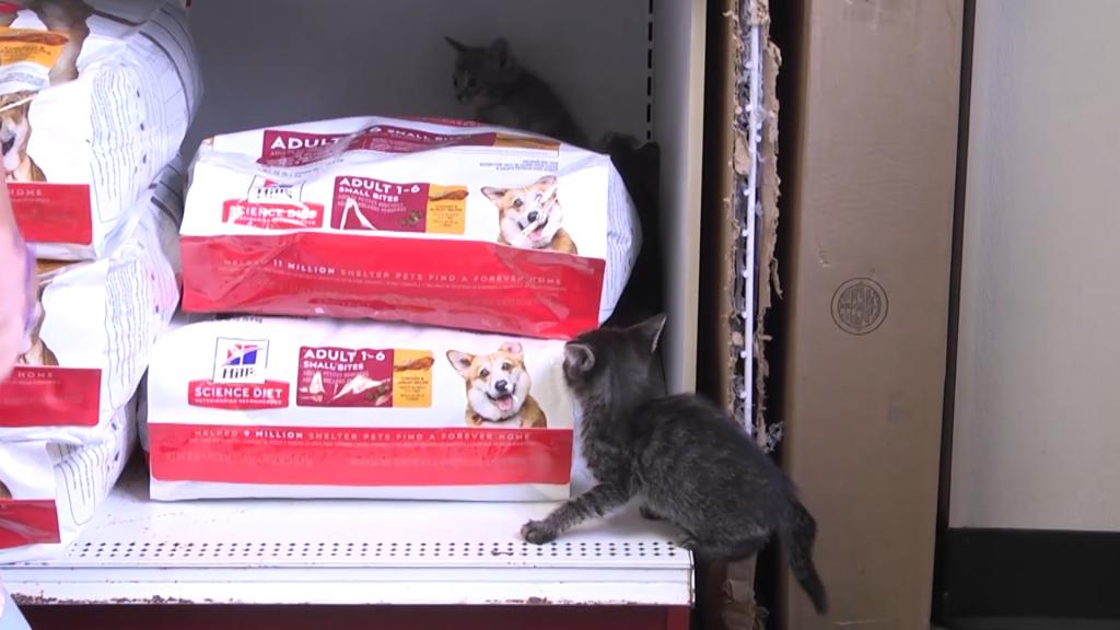 Kitten Quartet