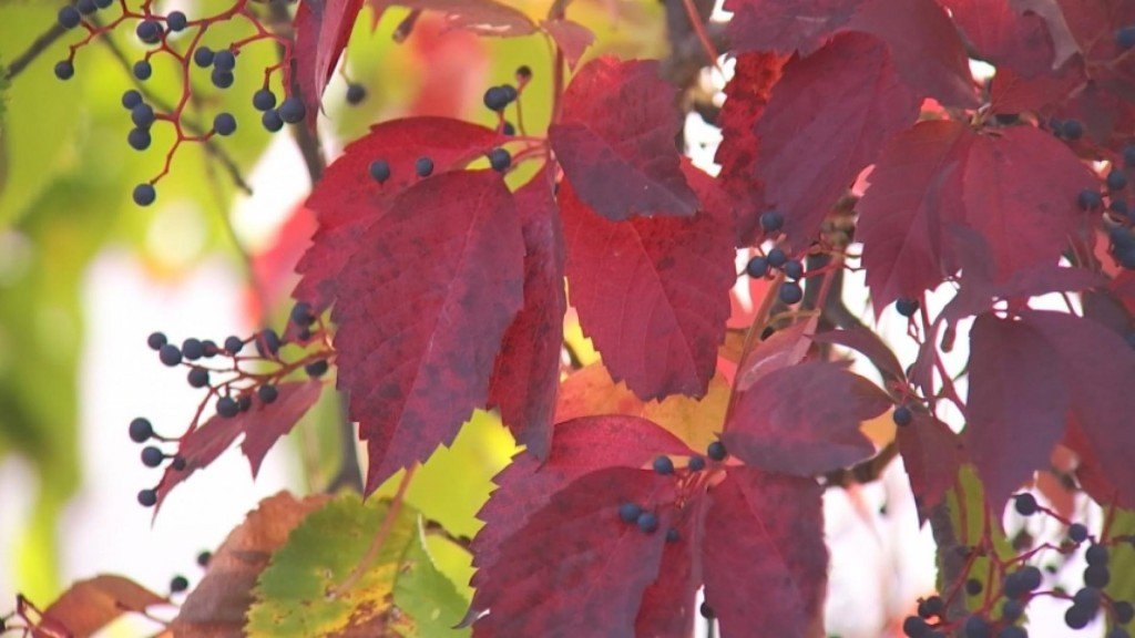 "Peak Color: How ""leaf Peepers"" Create Fall Forecast"