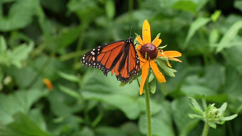 Butterfly Pic0