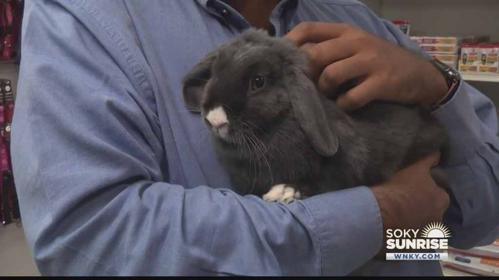 Pet Of The Day Lollipop