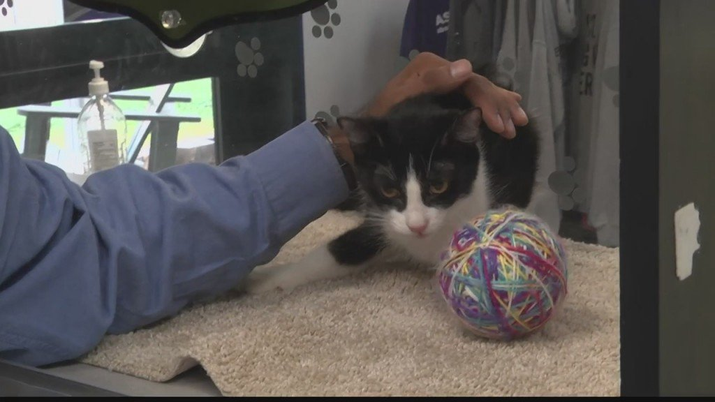 Pet Of The Day Willow