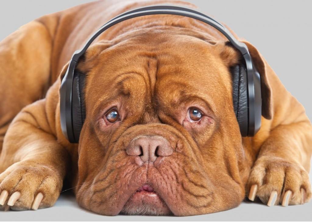 Perro Con Audifonos