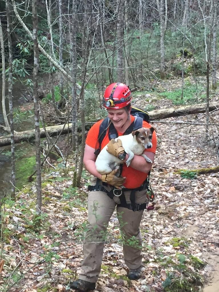 Dog falls into ravine