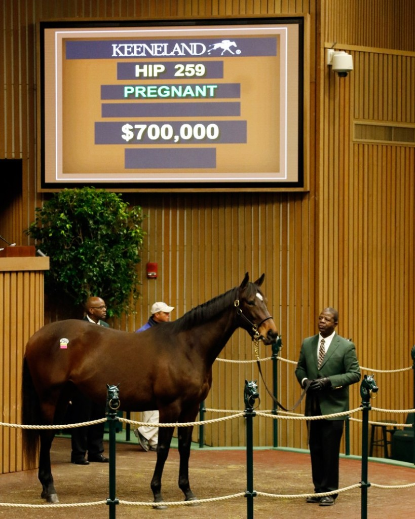 'Summer Solo' tops opening day of Keeneland's January Horses of All Ages Sale 1-11-16