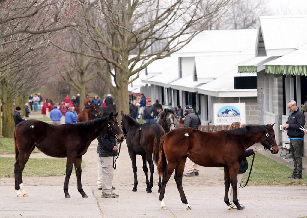 January Horses of All Ages Sale at Keeneland 2016