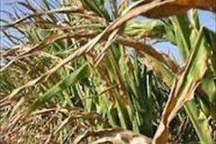 Another Kentucky farmer admits crop insurance fraud