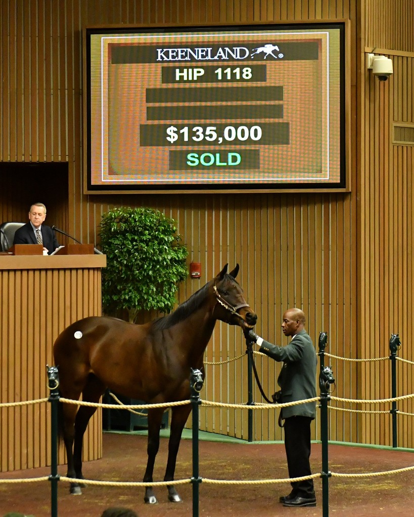 Fifth and Madison tops day 3 of January Horses of All Ages Sale at Keeneland 1-11-17