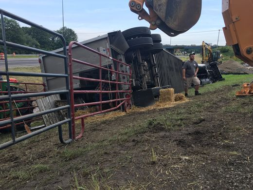 Cattle killed when truck driver from Stanton crashed in Indiana.  Photo courtesy of The Star Press of Muncie