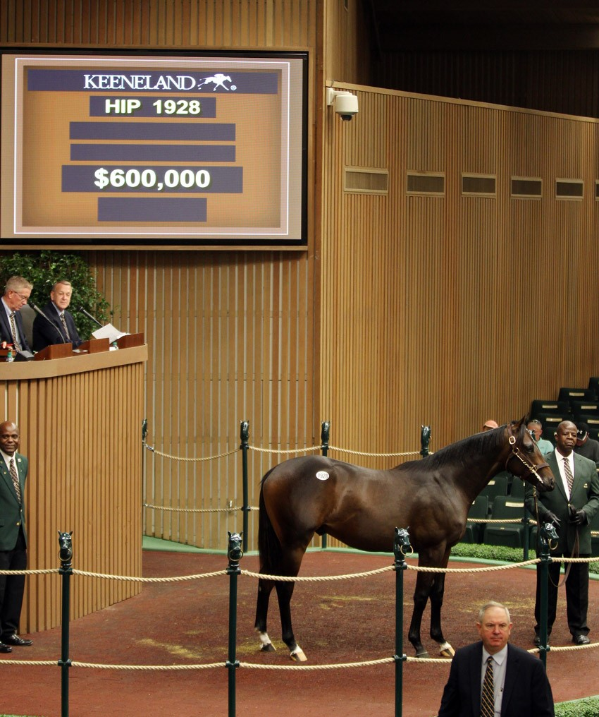 Bernardini colt tops yearling sale at Keeneland on 9-19-16 for $600