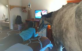 Horse in Super 8 Motel in Georgetown as its pet-friendly policy is tested