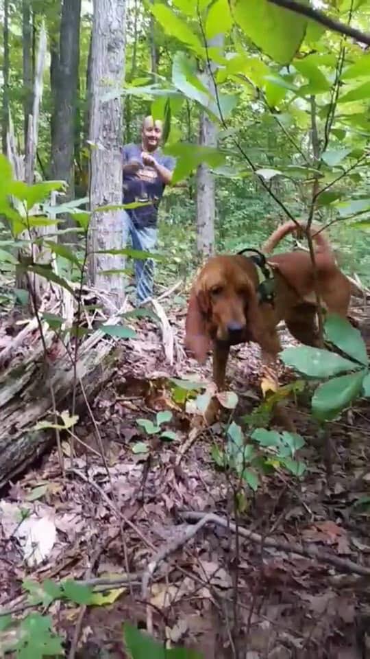 Bloodhound missing