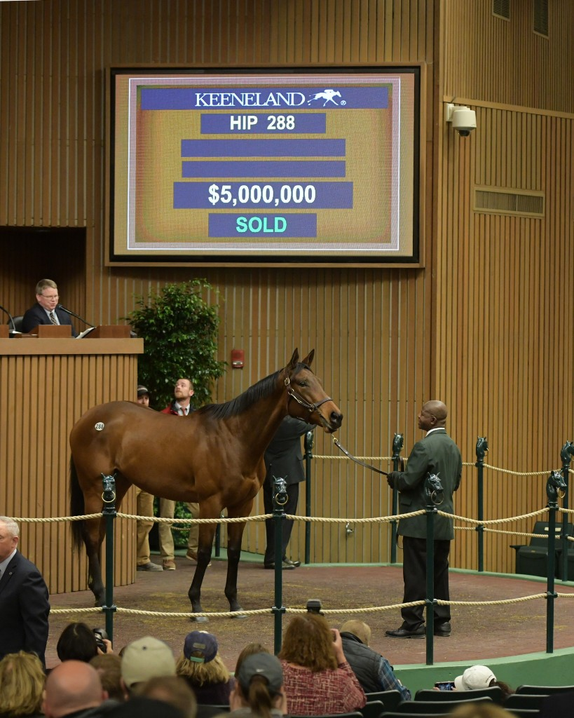 Abel Tasman sells for a record $5 million at Keeneland's January Horses of All Ages Sale 1-7-19