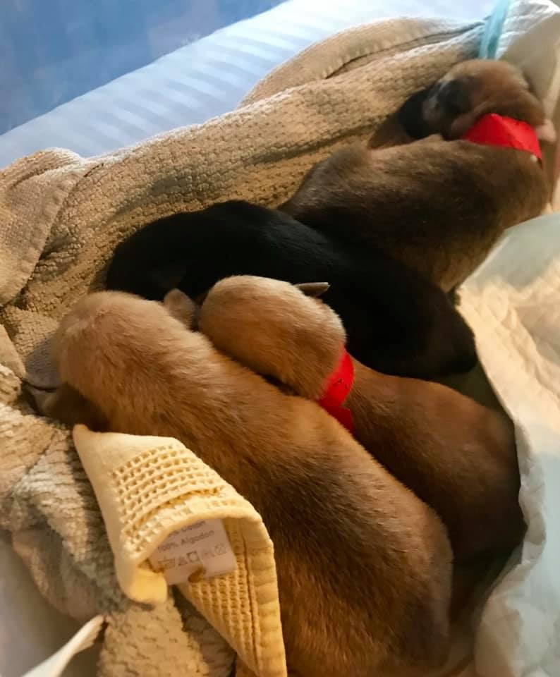 11 newborn puppies found abandoned in Jackson County.