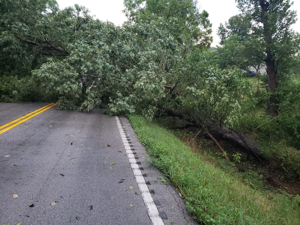 Storms knocked down large tree