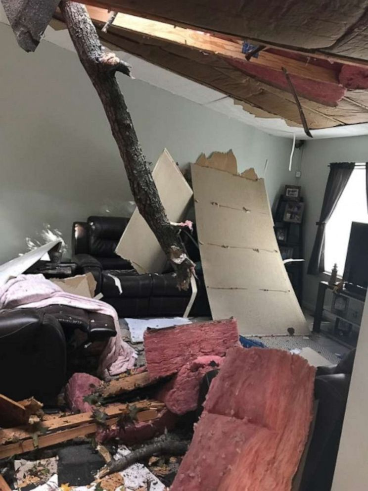 Maryland house tree collapse