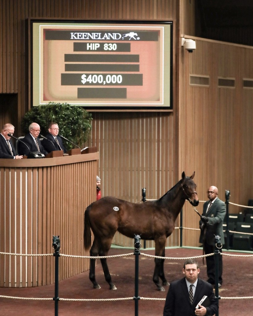 Yearling colt by Uncle Mo sells for $400
