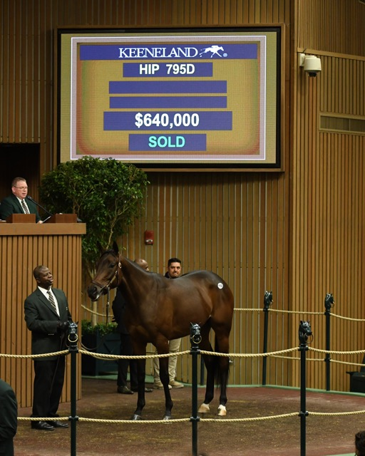 'Enaya Alrabb' tops second day of January Horses of All Ages Sale at Keeneland 1-14-20