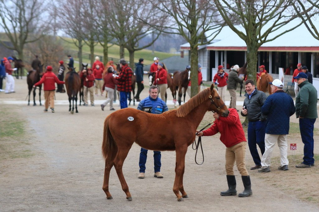 Shot from Keeneland's January Horses of All Ages Sale in January 2020