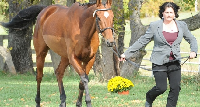 """Champagne Run Farm holds first annual """"Faux Star"""" event to help train less-experienced riders for competition."""