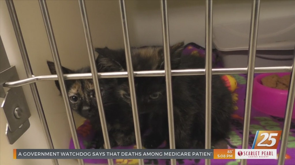 Jackson County Animal Shelter Facing Overcrowding Issues