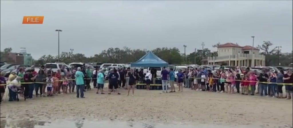 Mississippi Aquarium Turtle Release Set For Tomorrow In Gulfport