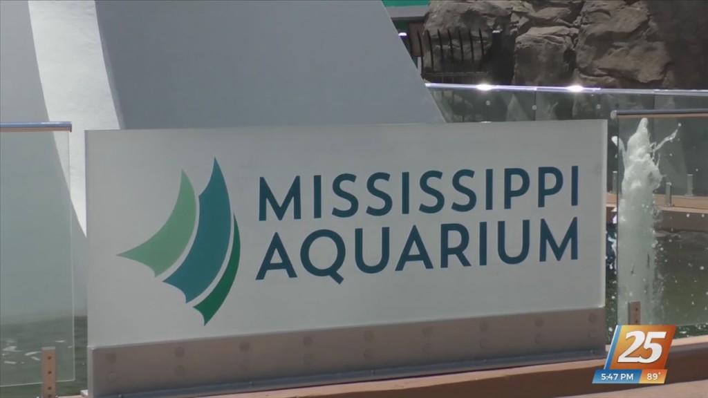 All Aboard Mississippi Aquarium's Eco Tours