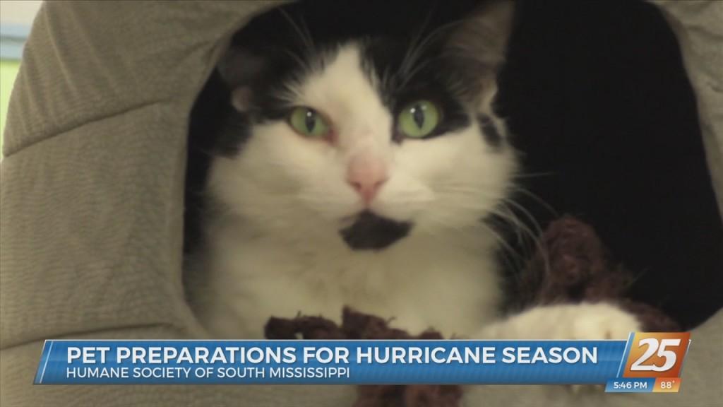 Pet Preparations For Hurricane Season