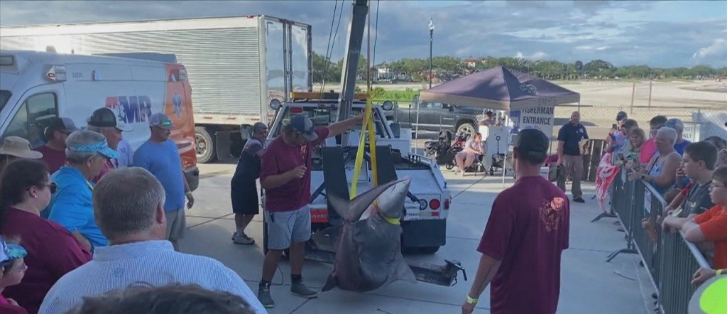 377.4 Pound Bull Shark Caught At The Mississippi Deep Sea Fishing Rodeo