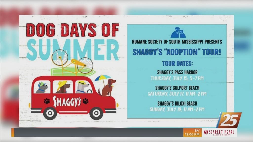 Hssm Dog Days Of Summer Shaggy's Adoption Tour