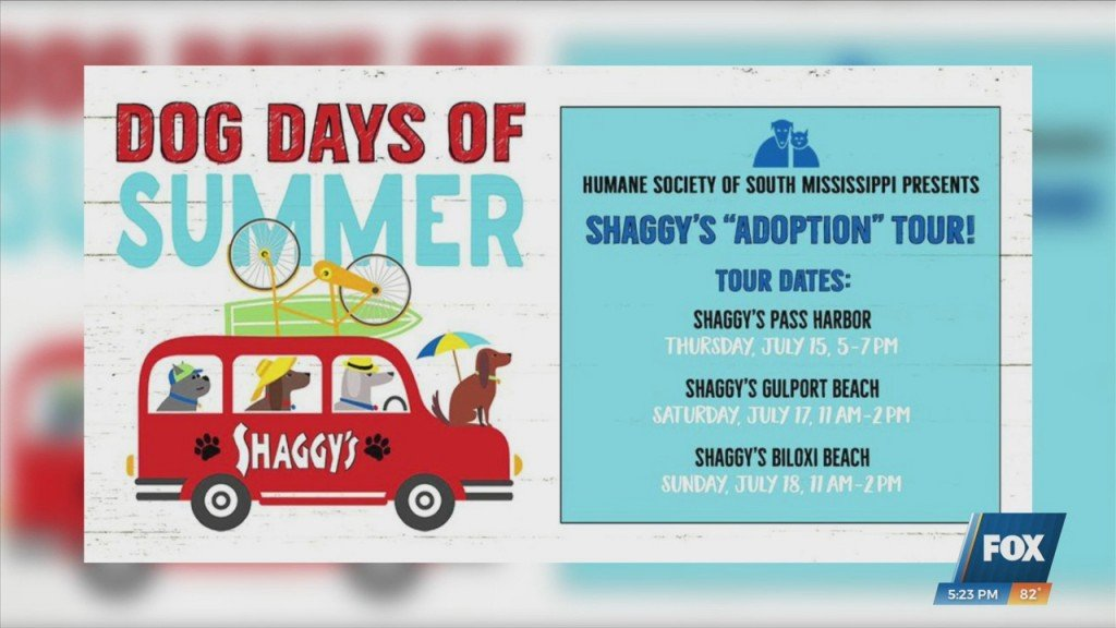 Hssm Hosting Dog Days Of Summer Shaggy's Adoption Tour