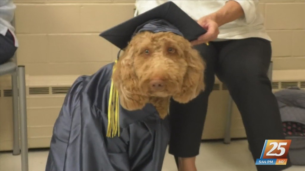 Visiting Pet Teams Of South Mississippi Holding Therapy Dog Graduation
