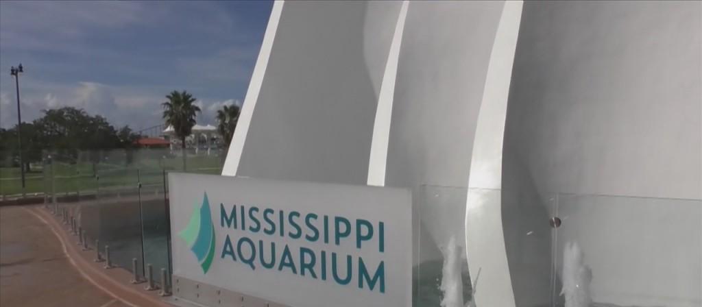 'shark Week' At The Mississippi Aquarium