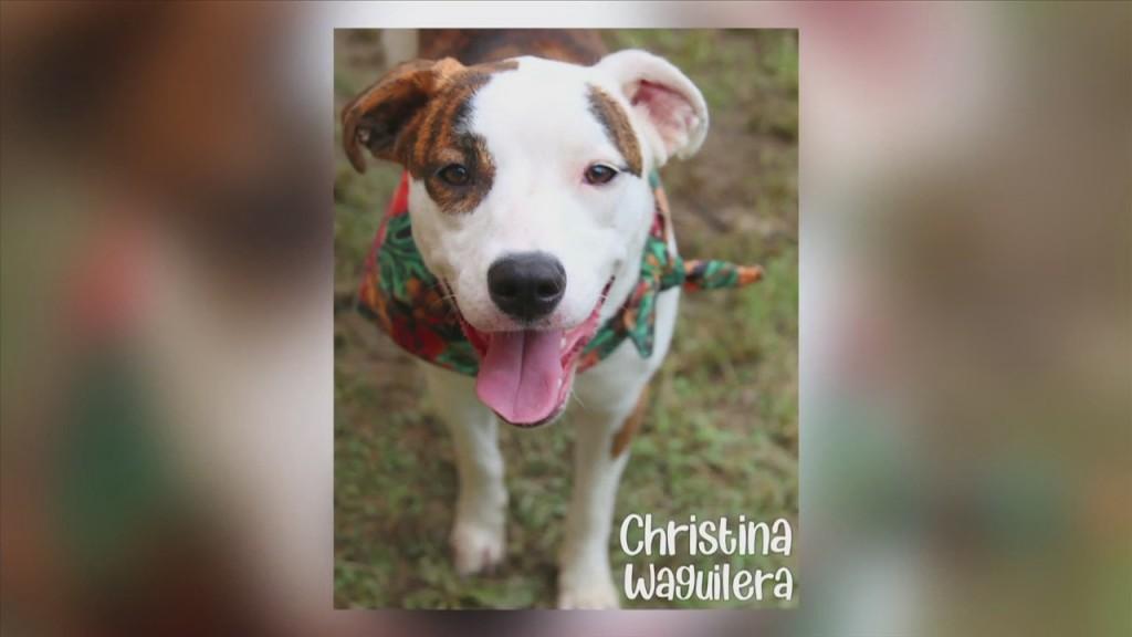 Pet Of The Week: Meet Christina Waguilera