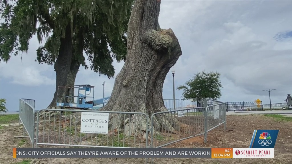 Locals Upset Over The Cutting Down Of 200 Year Old Live Oak In Ocean Springs