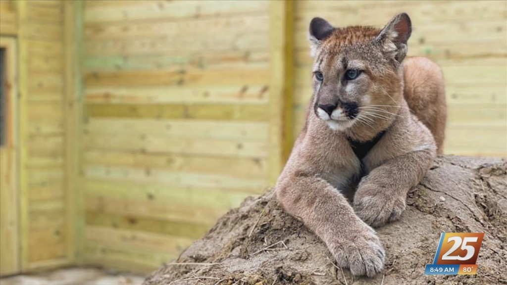 Wild Acres Hands On Animal Experience